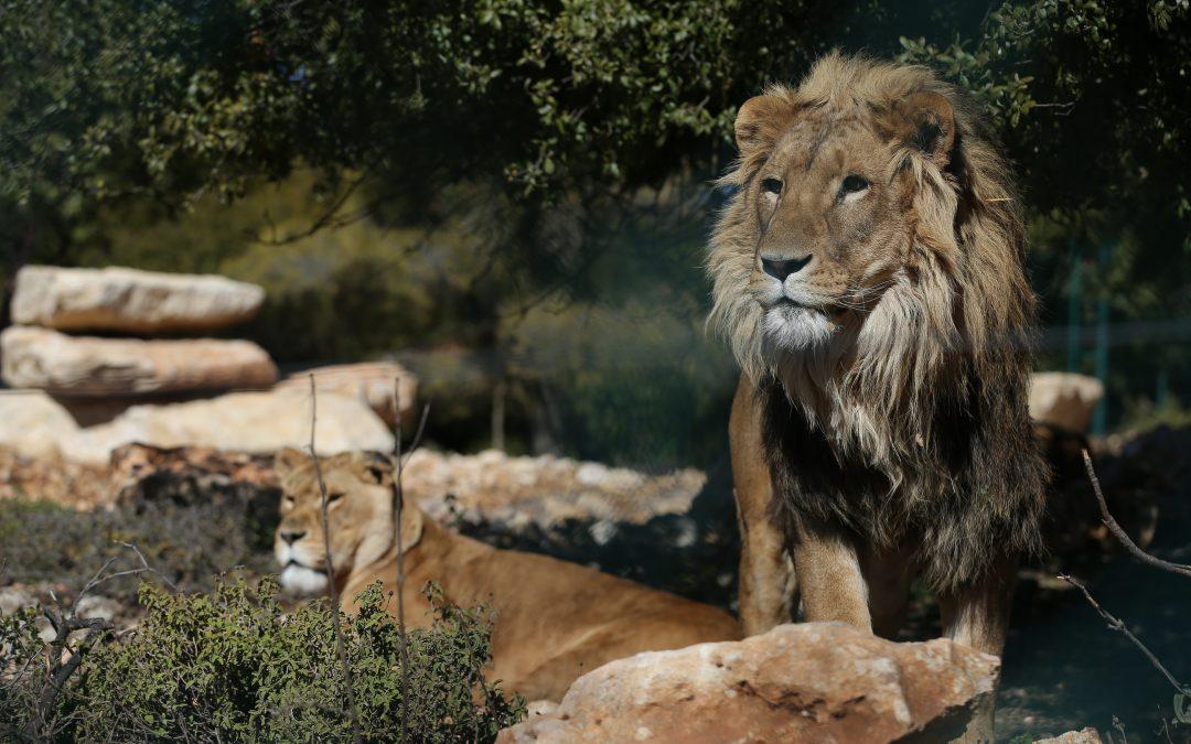 Simbas Pride