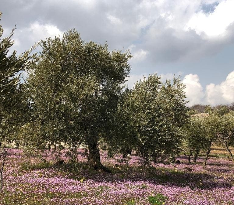 Glorious Spring Flowers at Al Ma'wa