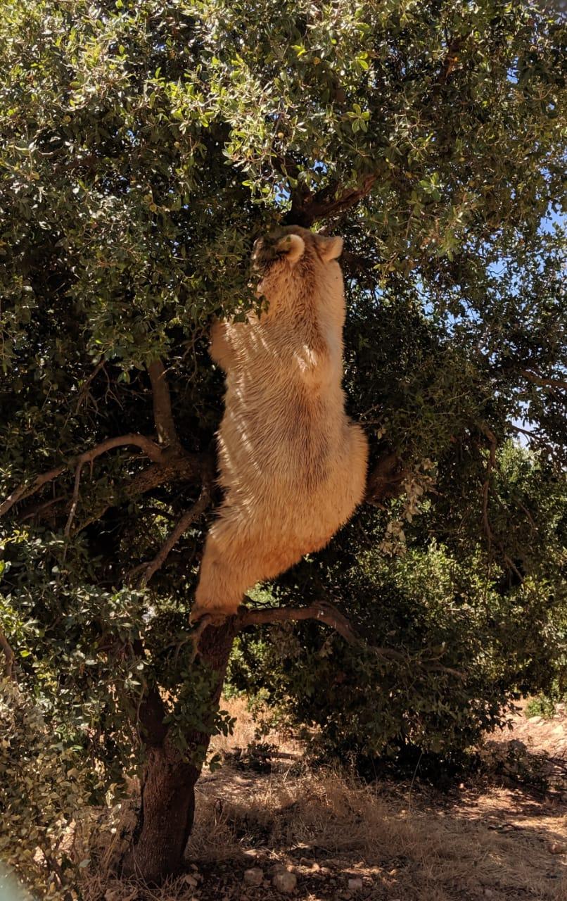 Balou climbing skills