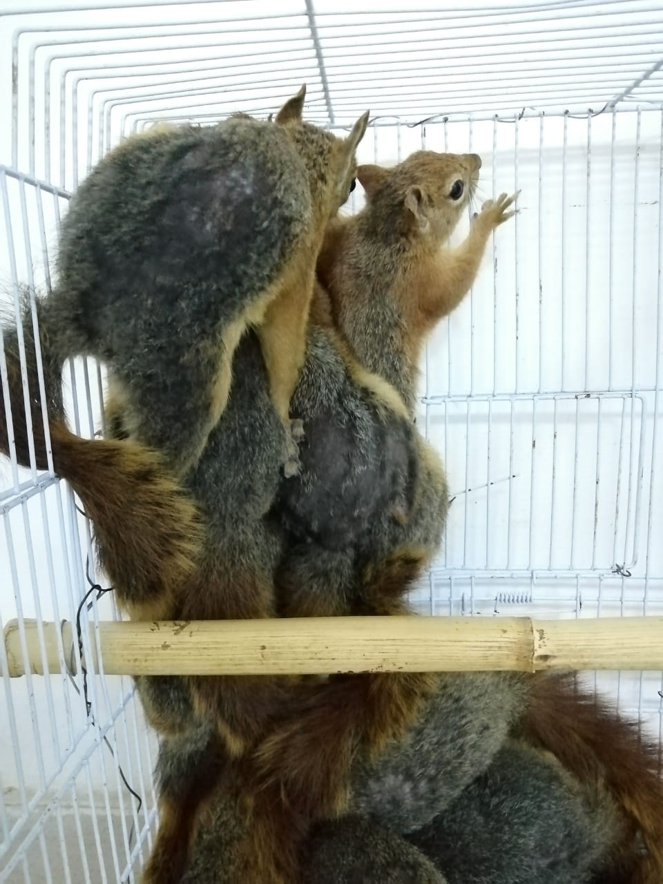 Squirrels as they arrived to NHC