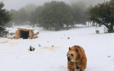 Snow day at Al Ma'wa